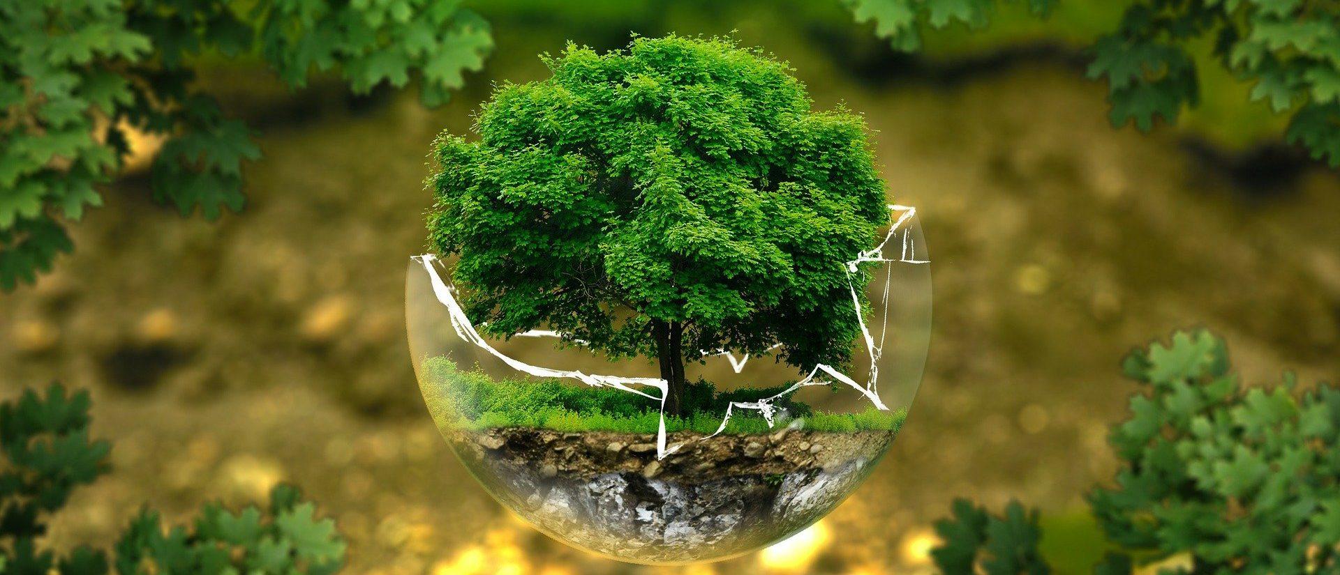 Kleiner Baum in zerbrochener Glaskugel